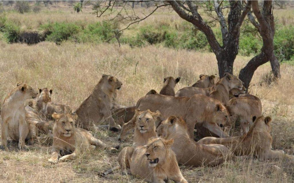 Amboseli Park - Kenya 2019 - VIP CLASS
