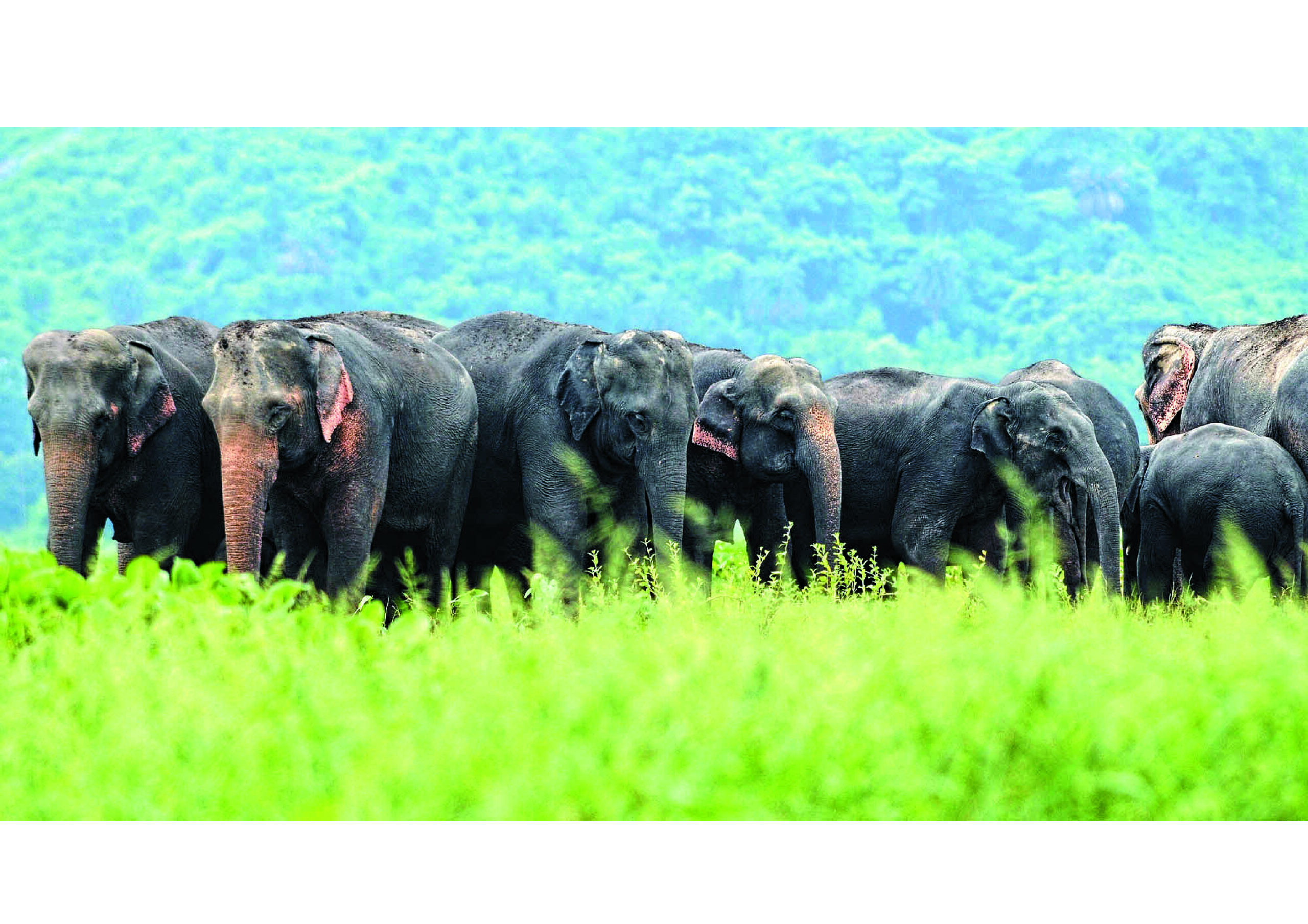 India: Culture & Wildlife of North East