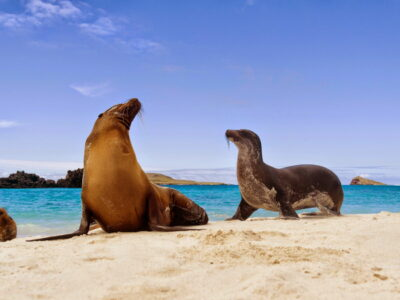 Galapagos on Your Own 5 Days